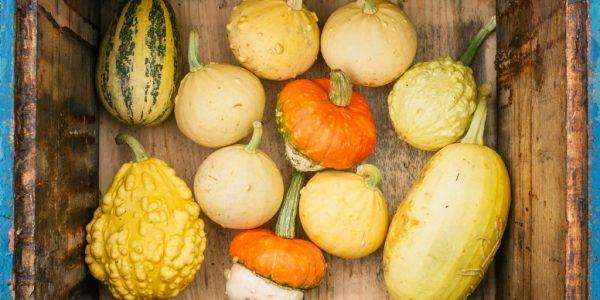 pumpkins-pxna7jq-1024x830